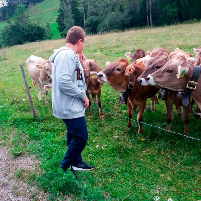 Kraftsammeln auf dem Bauernhof